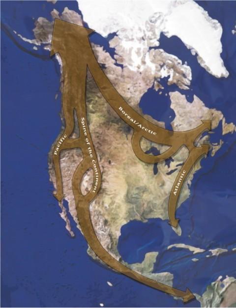 Rewilding (conservation biology)
