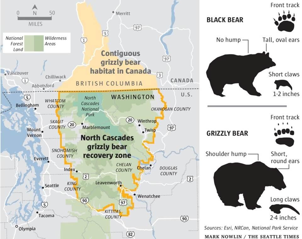 American bears pt three